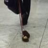 たわし(タワシ)を散歩させる紳士