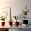 マーブルスの「観葉植物」考