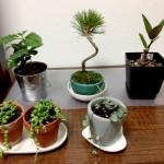 多肉植物の夏型、春秋型、冬型の管理を統一