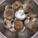 自家製椎茸の収穫